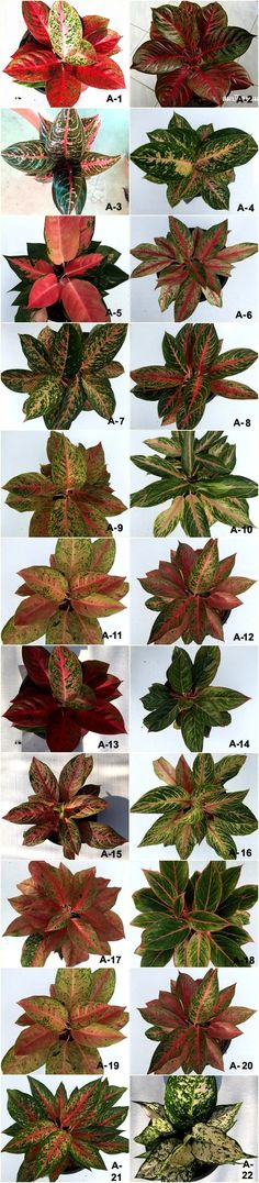 Leafy Plants, Foliage Plants, Indoor Plants, Cactus Planta, Cactus Y Suculentas, Unusual Plants, Exotic Plants, Types Of Flowers, Types Of Plants
