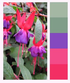 fuschsia colour swatch, via Flickr.