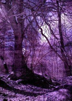 Puple woods