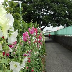 wall of flowers Visit the post for more.  on my daily life and tagged flower, japan, landscape, matchaatnoon, nature, on my daily life, summer, sunlight, tokyo, travel