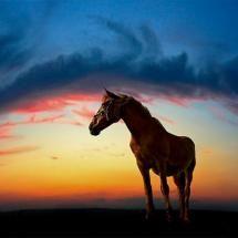 nice  sunset , riding a horse....beautiful.