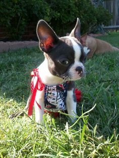 24 Best Texans Pet images in 2014 | Texans, Houston texans, Texans  free shipping