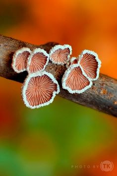 Осеннее вдохновение: грибы: polymerclayfimo
