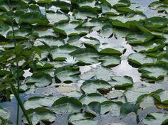 7 lakes holly michigan