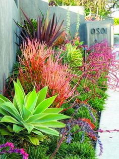 35 Exciting And Cheap Landscaping Ideas For Front Yard Cheap Landscaping Ideas, Small Front Yard Landscaping, Florida Landscaping, Succulent Landscaping, Tropical Landscaping, Landscaping With Rocks, Garden Landscaping, California Front Yard Landscaping Ideas, Patio Ideas