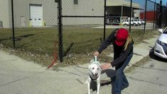 Door County Sled Dogs -Line Out Training -the first important command fo...