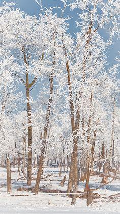 Beautiful frost! by Carla Dyck
