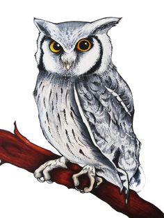 Scops Owl Copic Marker Illustration by Becky Warren