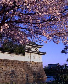 二条城 Cherry blossoms SAKURA in Kyoto JAPAN
