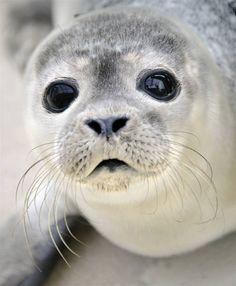 Seal #WorldOceansDay  @Emily Schoenfeld Schoenfeld Hand Oynar Plus Skincare