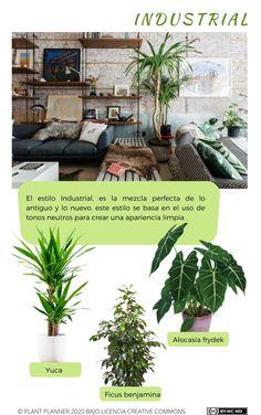 Si quieres aprender a sacar partido a tu estancia, de forma sencilla con plantas. Suscríbete a mi blog Ficus, Fuerza Natural, Nature, Plants, Blog, Gardens, Shape, Neutral Tones, Vintage Style