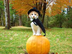 Halloowen cat