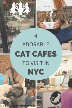 Cat cafes to visit in NYC. Click on the picture to find out more.