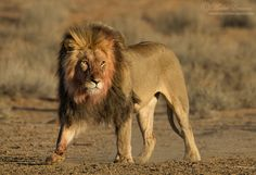 South Africa: Rich in National Parks » Focusing on Wildlife