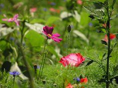 Poem: Wild Flowers
