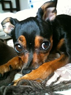 Pet Photography: Machito's Cousin: Looks just like him!