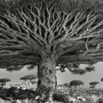 Really cool photos - wish I had this book! Ancient Trees: Beth Moon's 14-Year Quest to Photograph the World's Most Majestic Trees