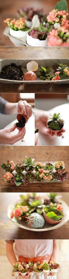 :o egg crate succulents
