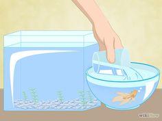Image titled Clean a Betta Fish Tank Step 5
