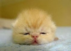 really cute & funny sleeping positions of cats!