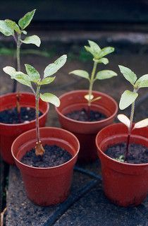 Sprouting and Thinning Seedlings: Choosing The Right Sprouts