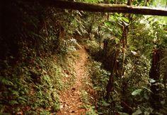 O Parque Estadual Turístico do Alto Ribeira tem 335.722 Km², 300 cavernas e é considerado Sítio de Patrimônio Natural da Humanidade