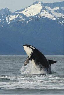 Southeast Alaska...ahhhhhh.  I would love to see a whale like this.
