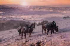 #horses #cavalli #monte #subasio #vsco #travel #snow #neve #winter