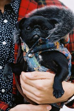Every tiny pug should have their own Mulberry vest... with a faux fur hood.