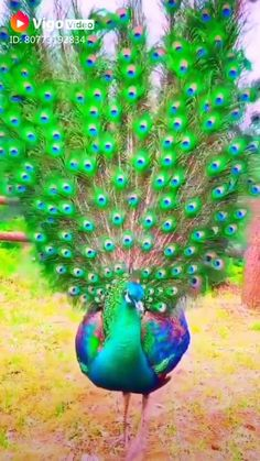 Weird Birds, Funny Birds, Cute Birds, Pretty Birds, Birds Pics, Colorful Animals, Colorful Birds, Nature Animals, Cute Animals