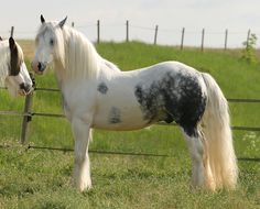 Gypsy horses are one of the most beautiful horse breeds in the world. At gypsy MVP you will find only the finest quality of this breed. We have a breeding program that is second to none. Most Beautiful Horses, Pretty Horses, Horse Markings, Gypsy Horse, Horses For Sale, Horse Breeds, Donkeys, Character Design Inspiration, Zebras