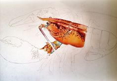 Progress Picture 2 Of My Lobster Colored Pencil Drawing Prints And Posters