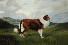 'Christopher': A Collie Dog in a Lake District Landscape  by F. Perrett