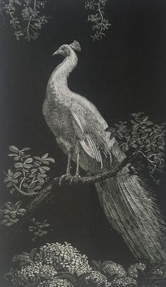 White Peacock 1925 by Lionel Lindsay. Woodcut, one of 100 copies, signed and signed in plate. Drypoint Etching, Australian Painters, Man And Dog, Wood Engraving, Fantasy Books, Illustration Art, Animal Illustrations, Art Market, American Artists