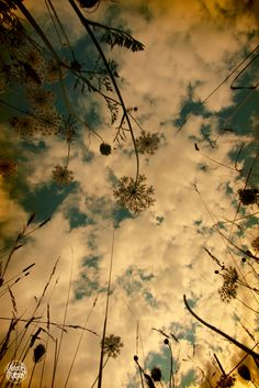 laying in the grass, gazing up at the sky.