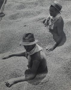 Martin Munkacsi - Coffee Tragedy in Barzil, 1932