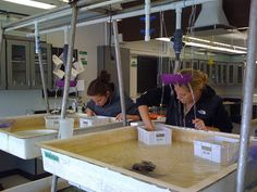 Marine Biology 450: Vacation Week/Projects!!!!