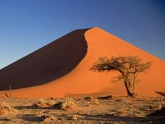 Sand Dunes And Acacia Tree Namib Desert Namibia - it has the Worlds second lowest population Acacia, Desert Ecosystem, Namib Desert, Desert Dream, Scenery Wallpaper, World Cities, Trees To Plant, Travel Photos, National Parks