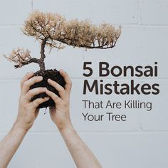 Growing a healthy bonsai is pretty straight forward, but we've all made bonsai mistakes. For many beginners, the learning curve is fraught with frustrating and dead trees. In this article, we'll cover 5 mistakes you might be making that could spell the demise of your miniature tree.