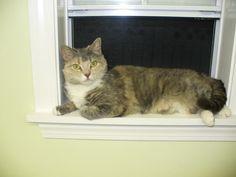http://www.kittycottagefranklin.com/images/gallery/7.jpg