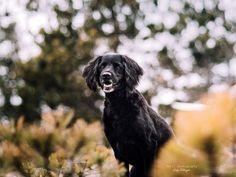 Hunde - Felli Photography - Vicky Fellinger Online Galerie, Dog Photography, Dogs, Animals, Photo Shoot, Animales, Animaux, Pet Dogs, Doggies