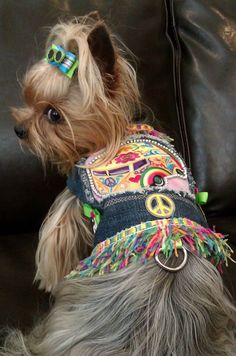 Hippie Yorkie - Hippie Vest Dog Harness by Ahh! Anita Humphreys Harnesses - Yorkie Model:  GiGi