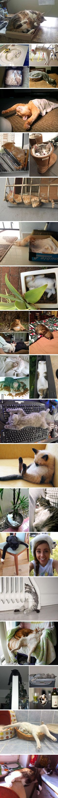 "These cats know how to master the art of ""Sleep-fu"" Sleeping Kitten, Sleeping Dogs, Sleeping Beauty, Kittens Cutest, Cute Cats And Kittens, Cool Cats, I Love Cats, Crazy Cats, Dog Inventions"
