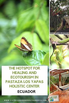 The hotspot for Healing & Ecotourism in Pastaza: Los Yapas Holistic Center - Visit Ecuador and South America Ecuador, Permaculture Courses, Holistic Center, South America, Latin America, Soil Improvement, Just Dream, Amazon Rainforest, Galapagos Islands