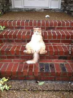 He just sits like a person and watches birds.