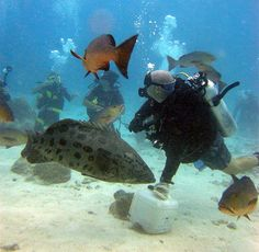 I learned that scuba diving is alot easier than it seems. While scuba diving i found a new hobby