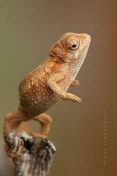 Extraordinary Reptiles & Amphibians Photography by Igor Siwanowicz