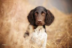 While many pet photographers take portraits highlighting the outer beauty of canine companions,photographer Anne Geiercaptures something a little more–the intangible essence of man's best friend. She also showcases the grace of a canine's soul. Amidst the enchanting, Austrian wilderness, the artist photographs her subjects in a way that allows their personalities to shine through. She …
