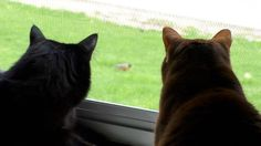 12 Birds, 2 Cats and a Chipmunk! Cole & Marmalade sure enjoy the Kitty TV at our new home…. I think we may need to purrchase a catio soon! :) 20.05.2016
