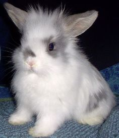 bunn hair day